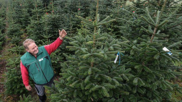 Tannenbaum Selber Schlagen.Weihnachtsbaum Selber Schlagen In Hannover Wedemark